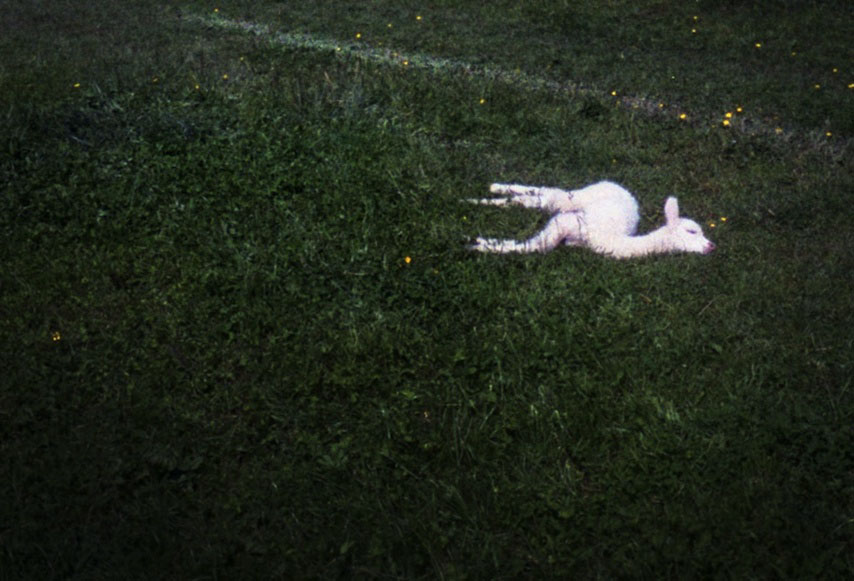 Lena Grass | alpaka