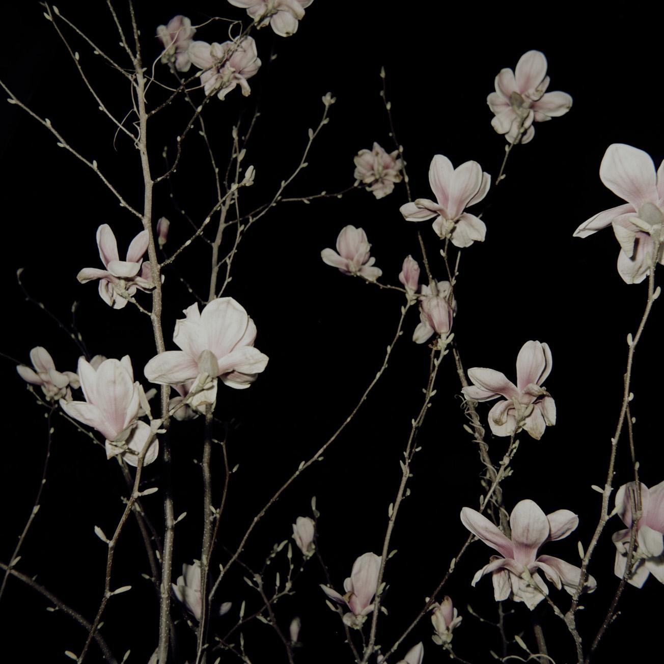 Lena Grass | magnolien